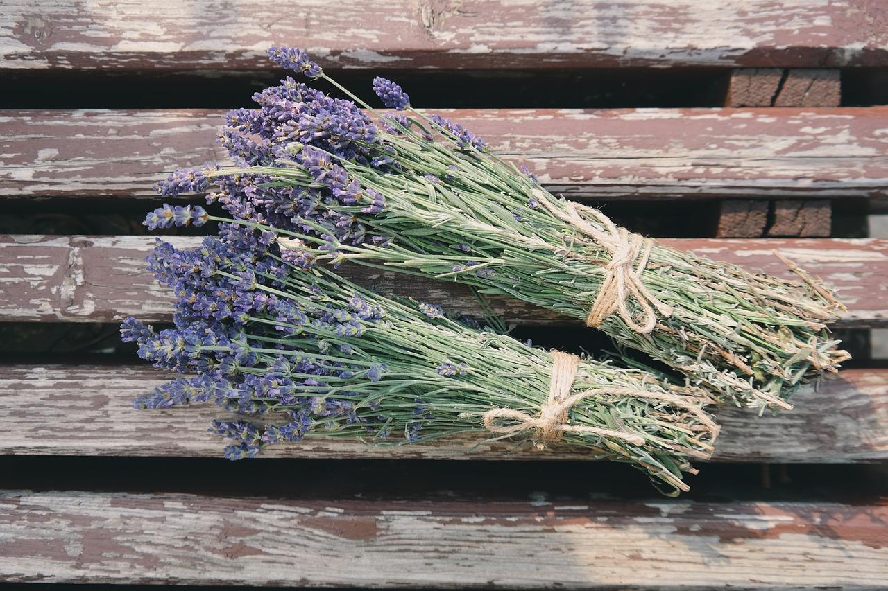 beautiful-flowers-1866481_1280